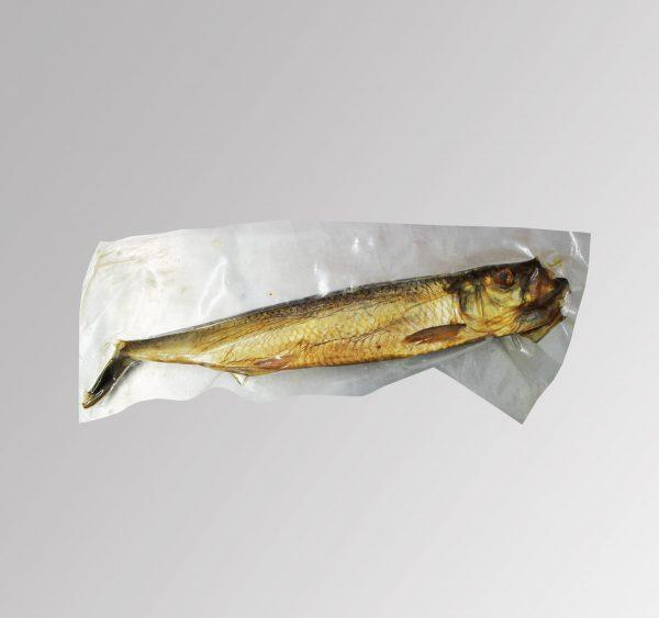 Regga-Fisch